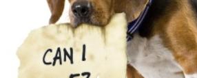 Pet Friendly Retirement Communities